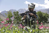 An Afghan National Army Soldier Patrols Through a Poppy Field Photographic Print