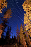Star Trails Above Campfire Lit Pine Trees in Lassen Volcanic National Park Photographic Print