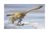 Deinonychus Antirrhopus Preys on a Fish Prints