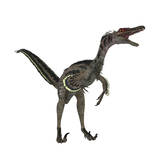 Velociraptor, a Theropod Dinosaur from the Late Cretaceous Period Print