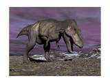 Aggressive Tyrannosaurus Rex Dinosaur Walking in the Desert Prints