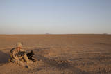 A Dog Handler with the U.S. Marine Corps Takes a Break Photographic Print