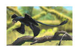 A Microraptor Perched on a Tree Branch Posters
