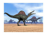 Three Spinosaurus Dinosaurs Walking in the Desert Prints