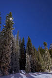 Orion Constellation Above Winter Pine Trees in Alberta, Canada Photographic Print