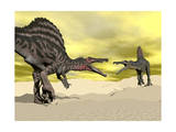 Two Spinosaurus Dinosaur Fighting in the Desert Poster