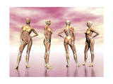 Female Muscular System from Four Points of View Print