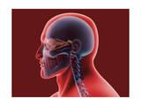 Conceptual Image of Human Eye and Skull Prints