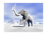 Large Mammoth Walking Slowly on the Snowy Mountain Against the Wind Posters