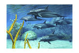 A Pod of Striped Dolphins Swimming Along a Reef Posters
