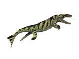 Dakosaurus, White Background Prints