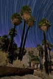 California Fan Palms and a Backdrop of Star Trails in Anza Borrego Desert State Park Photographic Print