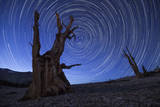 Star Trails Above an Ancient Bristlecone Pine Tree, California Photographic Print