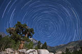 A Pine Tree on a Windswept Slope Reaches Skyward Towards North Facing Star Trails Photographic Print