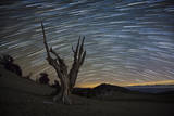 A Dead Bristlecone Pine Tree Against a Backdrop of Star Trails Photographic Print