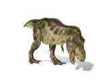 Tyrannosaurus Rex Dinosaur on White Background Prints