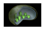 Conceptual Image of Chloroplast Prints