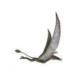Dorygnathus Flying Dinosaur Posters
