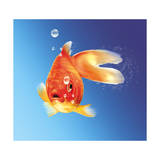 Goldfish with Water Bubbles Affiches
