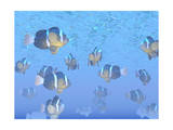 A School of Clownfish Swimming in the Sea Prints