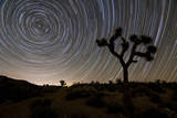 Star Trails and Joshua Trees in Joshua Tree National Park, California Photographic Print