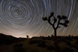 Star Trails and Joshua Trees in Joshua Tree National Park, California Photographic Print
