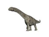 Argentinosaurus Dinosaur, White Background Prints
