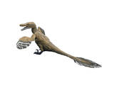 Velociraptor Mongoliensis, Late Cretaceous of Mongolia Prints