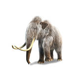 Woolly Mammoth, White Background Premium Giclee Print