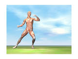 Male Musculature in Fighting Stance Prints