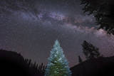 A Lone Lit Pine Tree Glows under the Arch of the Milky Way Lámina fotográfica