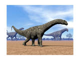 Three Argentinosaurus Dinosaurs Walking in the Desert Posters