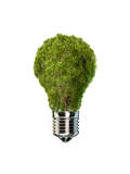 Light Bulb with Tree Inside Glass, Isolated on White Background Obrazy