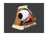 Conceptual Image of Human Eye Anatomy Art
