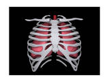 Conceptual Image of Human Lungs and Rib Cage Posters