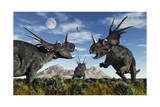 Confrontation Between Male Styracosaurus Dinosaurs Posters