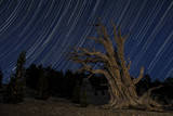 A Bristlecone Pine Tree Sits Against a Path of Star Tails, California Photographic Print