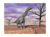 Argentinosaurus Standing on the Cracked Desert Ground Next to Dead Trees Posters