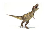 Tyrannosaurus Rex Dinosaur on White Background Print