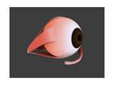 Conceptual Image of Human Eye Anatomy Poster