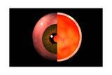 Conceptual Image of Human Eye Cross Section Poster
