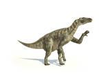 Iguanodon Dinosaur in Dynamic Posture Posters