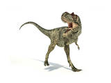 Albertosaurus Dinosaur on White Background Poster