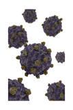 Conceptual Image of Coxsackievirus Prints