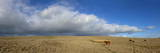Panoramic View, the Epynt, Cambrian Mountains, Powys, Wales, United Kingdom, Europe Photographic Print by Graham Lawrence