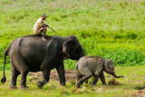 Elephant and Mahout, Kaziranga, Assam, India, Asia Photographic Print by Bhaskar Krishnamurthy