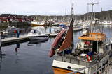Trondheim Harbor, Trondheim, Norway, Scandinavia, Europe Photographic Print by Olivier Goujon