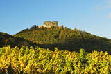 Hambach Castle and Vineyard Landscape Photographic Print by Jochen Schlenker