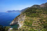 Terraced Vineyards at Corniglia Photographic Print by Mark Sunderland