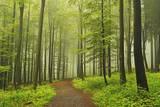 Morning Fog in Forest Near Bad Marienberg, Westerwald, Rhineland-Palatinate, Germany, Europe Photographic Print by Jochen Schlenker